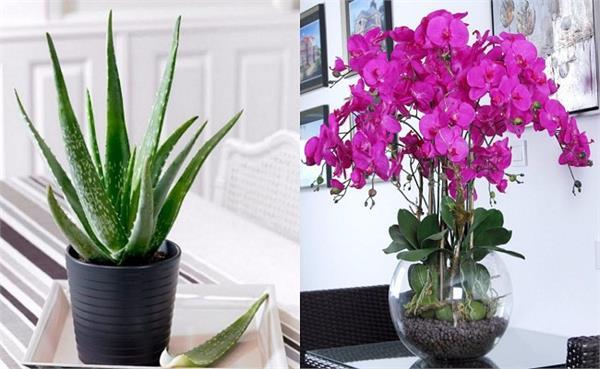 ये 8 पौधों जो रात को भी देते हैं ऑक्सीजन