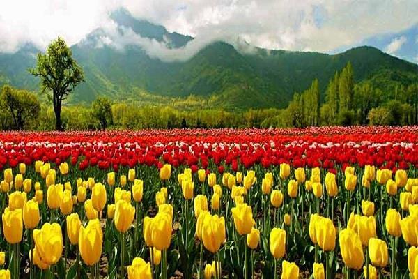फूलों की खेती करके भी कमा सकते है अच्छा मुनाफा