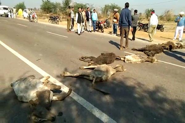गौशाला की लापरवाही से 14 गायों की मौत, ग्रामीणों ने लगाया जाम