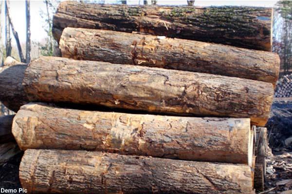 खैर की लकड़ी से भरी जीप पकड़ी, चालक मौके से फरार