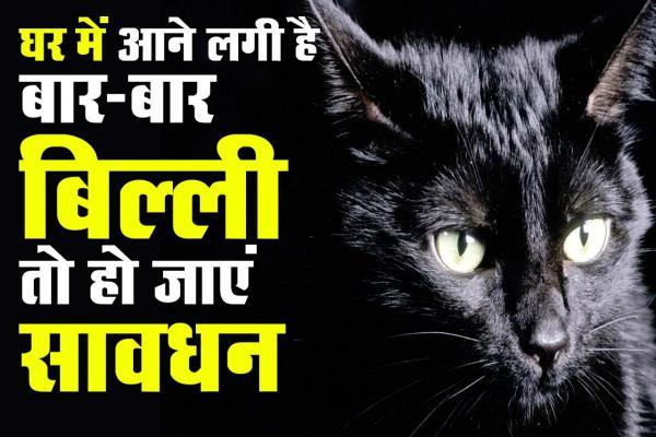 घर में बिल्ली का आना कर सकता है आपके भविष्य के साथ खिलवाड़, बचें अदृश्य वार से