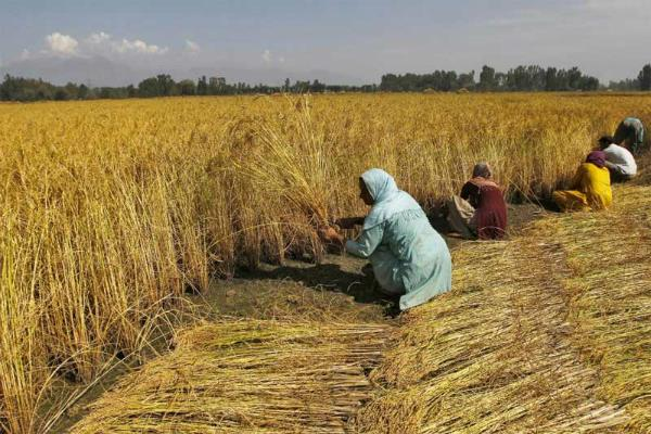 गर्मी की मार से किसान परेशान, सता रही है फसल की चिंता