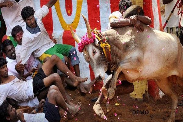 तमिलनाडु में जल्लीकट्टू के दौरान सांडों के हमले में दो की मौत, 80 घायल