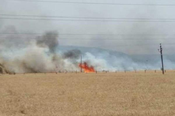 मोगा के गांव शेरेवाल में गेहूं को लगी आग