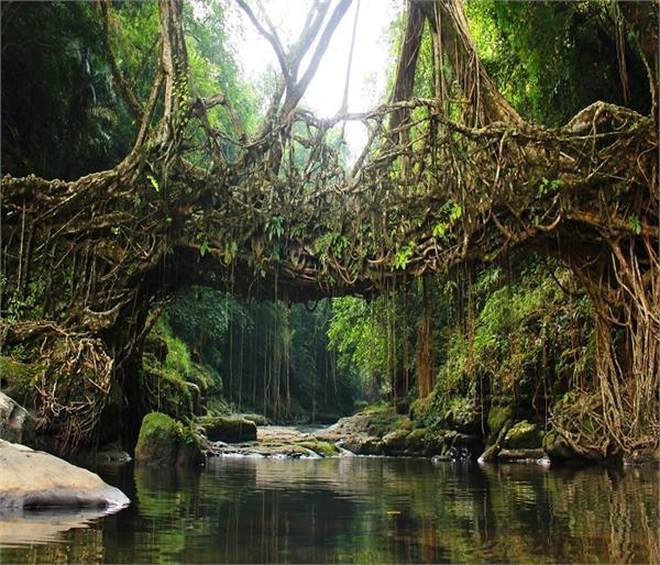 North India के कुछ अनोखे पुल, एक बार जरूर घूम आए