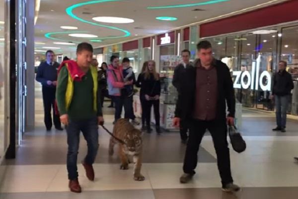 ...जब मॉल में अचानक आ गया बाघ, फिर जो हुआ उसने सभी को कर दिया Shocked