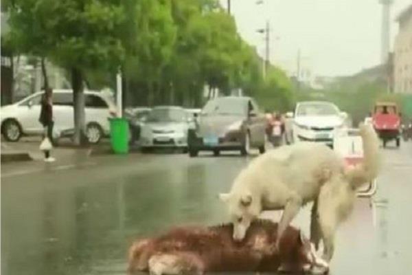 इस कुत्ते का वीडियो देखकर भावुक हो जाएंगे आप