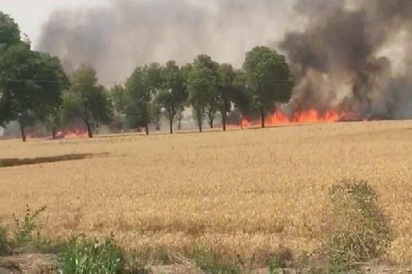 शॉर्ट सर्किट से खेतों में लगी जबरदस्त अाग, करोड़ों को नुकसान