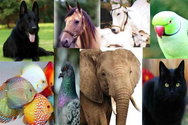 घर में इन रंगों के पशु-पक्षी रखने से जमकर बरसता है पैसा, मिलते हैं ढेरों लाभ
