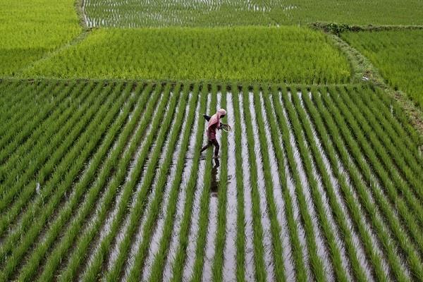ये है देश के 4 करोड़पति किसान, किसी ने छोड़ी नौकरी तो कोई चलाता था दुकान