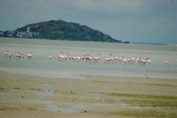 आप भी करें भारत में खारे पानी की सबसे बड़ी झील की रोमांचकारी यात्रा