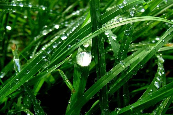 'इस साल सामान्य से ज्यादा बारिश की उम्मीद, पैदावार में हो सकता है 15% इजाफा'