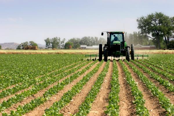 भारत, इजरायल के साथ कृषि के क्षेत्र में दूसरे चरण के सहयोग को उत्सुक