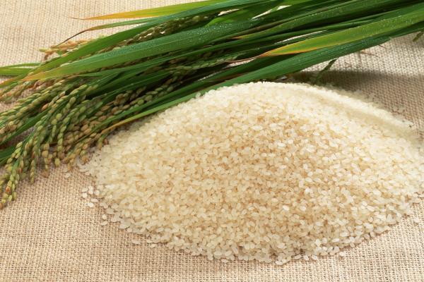 2017-18 में भारत में चावल उत्पादन में होगी 11 करोड़ टन की बढ़ौतरी