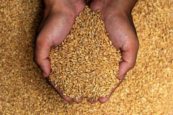 बीते सप्ताह चावल और गेहूं कीमतें रही मजबूत