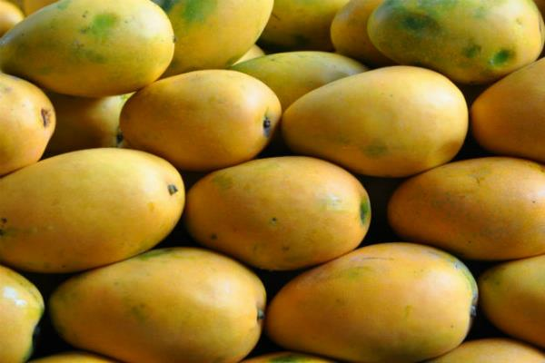 आस्ट्रेलिया को 300 टन आम का निर्यात करेगी इनोवा एग्री