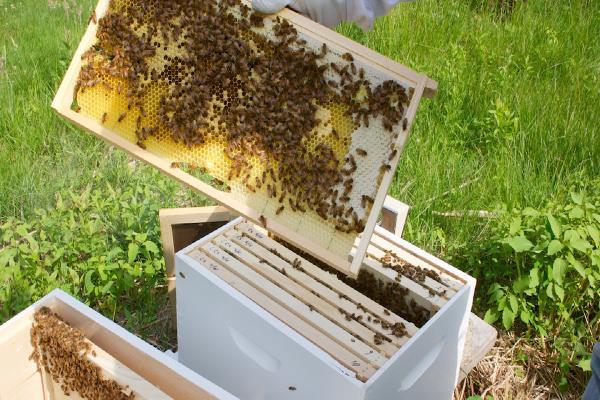 किसानों की आय बढ़ाने के लिए सिंचाई, मधुमक्खी पालन पर जोर