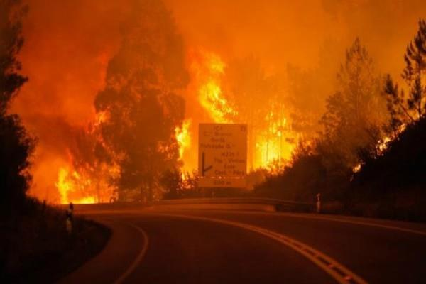 पुर्तगाल में जंगल में लगी आग से 25 लोगों की मौत, 20 झुलसे(Pics)
