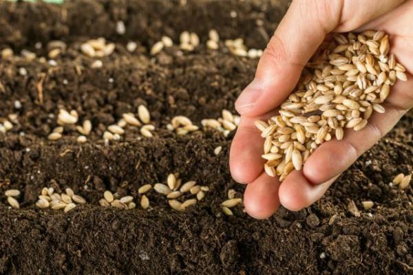 Hybrid बीजों के मूल्य में 10% कटौती, 19 जून से लागू होंगे नए दाम