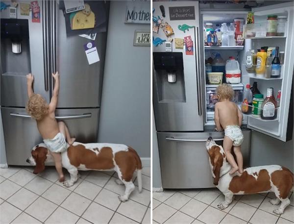 VIRAL हुअा इस नन्हें से बच्चे का कारनामा, कुत्ते पर चढ़कर मिटाई भूख!