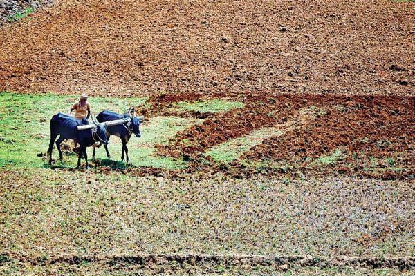 कृषि ऋणमाफी से इन किसानों को नहीं मिलेगी राहत, जानिए क्यों?