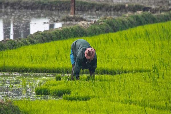 'किसानों की हड़ताल का मुंबई पर असर नहीं'
