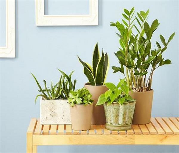 घर में लगाएं ये पौधे, रहेंगे बीमारियों से बचें