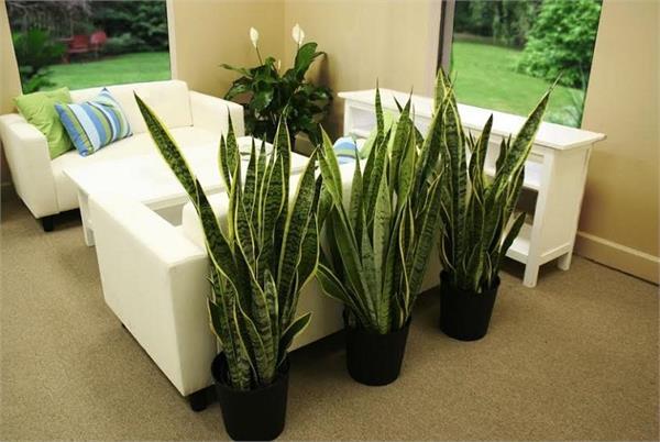 घर रहेगा ठंडा-ठंडा कूल-कूल, लगाएं ये पौधे