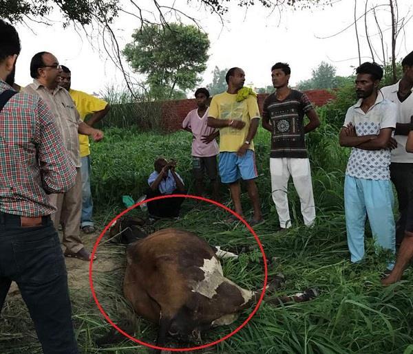 अमानवीय ढंग ले किया गाय की हत्या, लोगों में भारी रोष