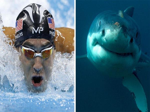 फेल्प्स और शार्क की रेस की सच्चाई जानकर फैंस को आया गुस्सा और किए ऐसे कमेंट्स