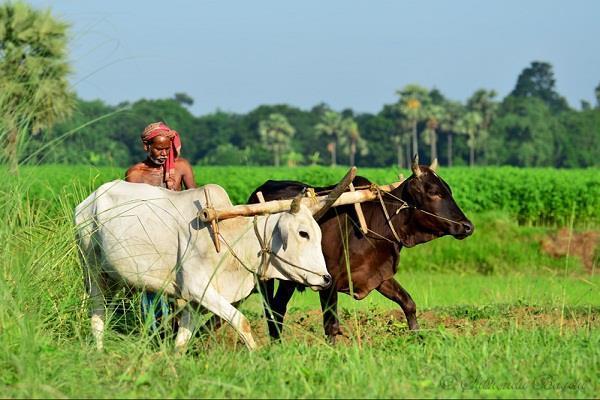आलू के दामों में गिरावट से उड़ी किसानों के चेहरे की रंगत