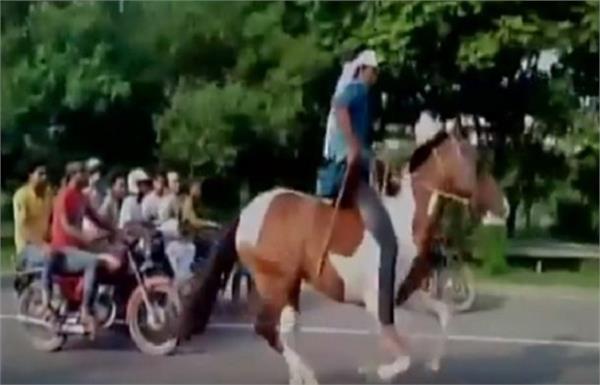 नोएडा एक्सप्रेस-वेः यहां 2 घोड़ों की रेस पर चले जुआरियों के दांव, जोर शोर से हुई चेज और हूटिंग