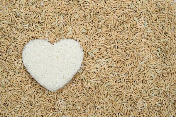 बीते सप्ताह बासमती चावल और गेहूं की कीमतों में रही तेजी
