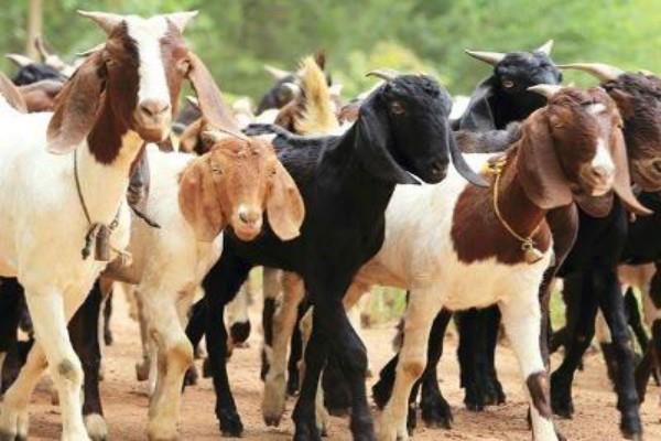 पाकिस्तान: बकरी चोरी के आरोप में किशोर की हत्या