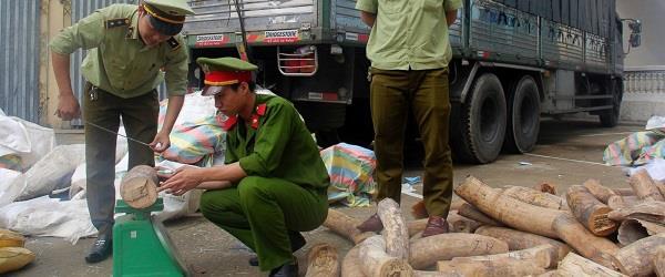 तस्करी कर लाए जा रहे 3 टन हाथी दांत वियतनाम में जब्त