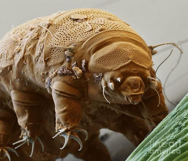 10 अरब साल तक जिंदा रहेगा 8 पैर वाला ये जीव!