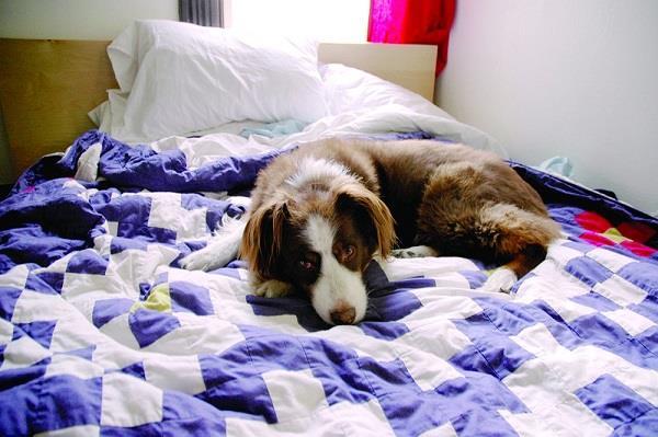 कुत्ते के साथ सोने के लिए कर दिया पति का बिस्तर अलग !