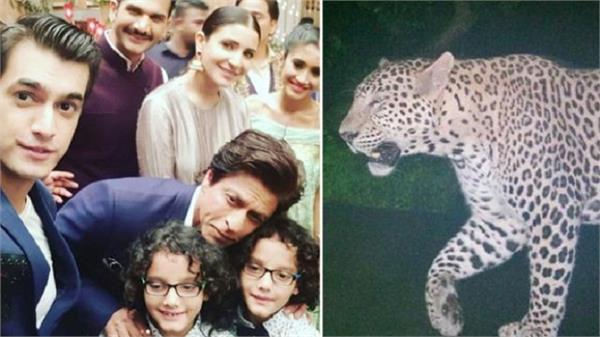 jab harry met sejal leopard causes shooting halt on shahrukh khan anushka