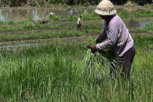 कृषि विभाग CCE पर खर्च कर सकता है 3 करोड़