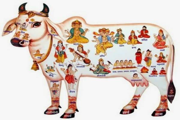 सुख करनी दुख हरनी गाय देती है वरदान अनेक