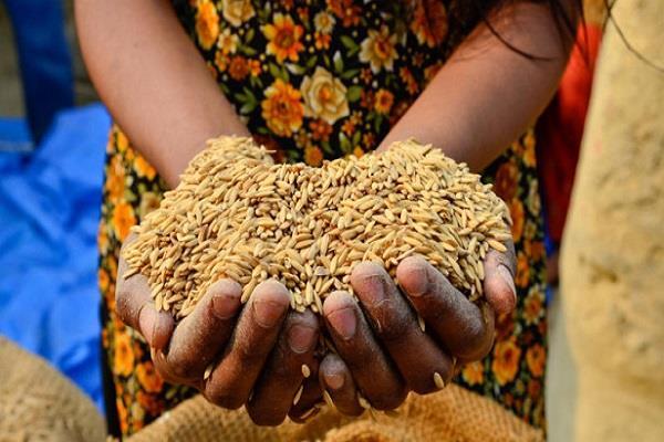 बिहार में राष्ट्रीय खाद्य सुरक्षा मिशन योजना के लिए 1.4 करोड़ मंजूर