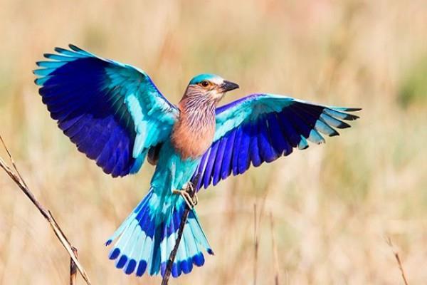 विजयादशमी पर दिखे ये पक्षी, पूरा साल खुशियां और तरक्की रहेंगी अंग-संग