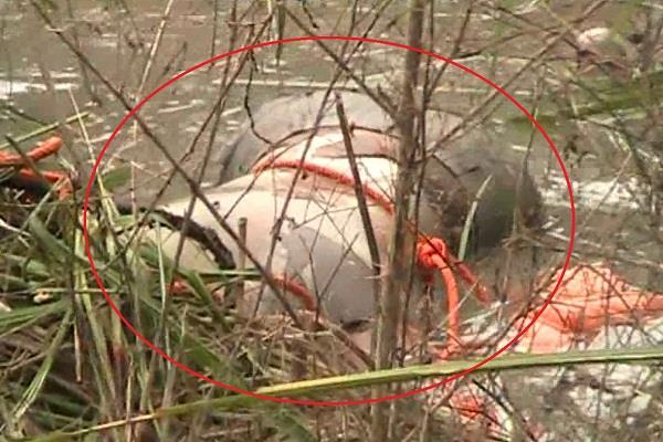 तैराक युवक का 4 दिन से लापता शव नहर से बरामद, जांच में जुटी पुलिस