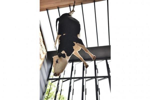 रेस्तरां मालिक ने लटका दी जिंदा गाय, सोशल मीडिया पर मचा बवाल