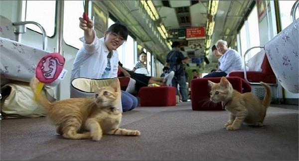 वाह! यहां तो बिल्लियों के लिए भी चलती है स्पेशल ट्रेन