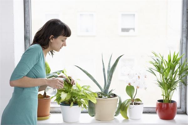 डेकोरेशन ही नही, कई  हैल्थ प्रॉब्लम भी दूर करते हैं ये 4 पौधे
