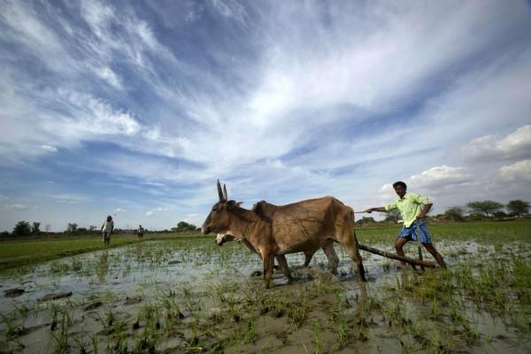 बजट 2018: क्या बदलेगी किसानों और कृषि की तस्वीर?
