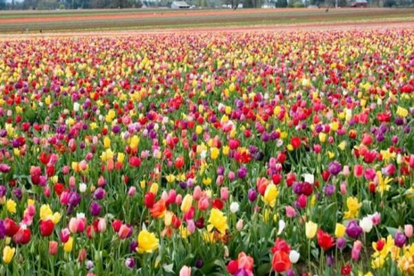 फूलों की खेती करके आप भी कमा सकते है लाखों रुपए