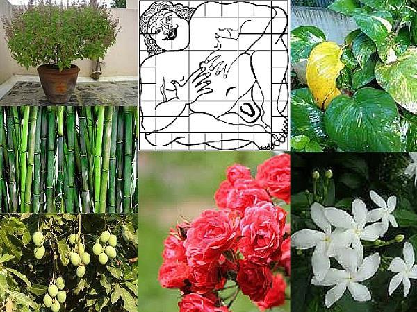 वास्तु-फेंगशुई: घर में न लगाएं ये फूल, कभी उन्नति नहीं कर पाएगा परिवार