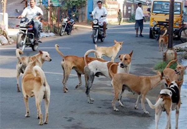 आवारा कुत्तों का आतंक, घर से बाहर निकलने से कतराते हैंं लोग